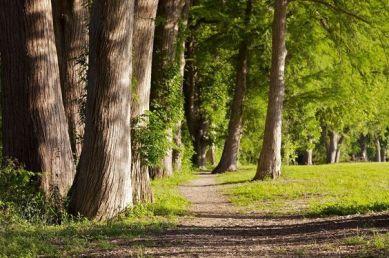 Trees Trail